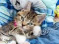 Belle - Cat Photographer - Bishop Auckland