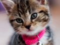 Belle - Cat Photography - Bishop Auckland