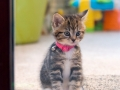 Belle - Kitten Photographer - Bishop Auckland