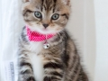 Belle - Kitten Photography - Bishop Auckland 2
