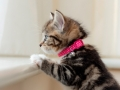 Belle - Kitten Photography - Bishop Auckland