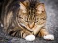 Belle - Pet Photographer - Bishop Auckland 3