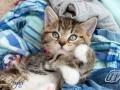 Belle - Pet Photographer - Bishop Auckland
