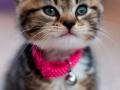 Belle - Pet Photography - Bishop Auckland