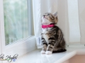 Belle - Pet Photography - County Durham