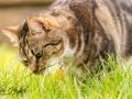Belle - Pet Portraits - County Durham