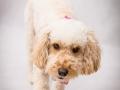 1-Elsa-Dog-Portrait-Pet-Portrat-Bishop-Auckland