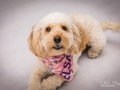 3-Elsa-Dog-Portrait-Photographer-Bishop-Auckland