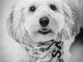 4-Elsa-Dogp-Portrait-Pet-Photographer-North-East-Durham