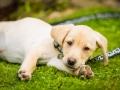 16-Fox Dog Pet Portrait, Bishop Auckland, Durham