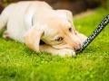 04- Pet Portrait & Animal Photographer, Bishop Auckland, County Durham
