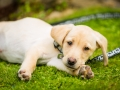 05- Pet Dog Portrait & Photographer, Bishop Auckland, County Durham