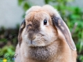 Toffee - Animal Photography - Bishop Auckland