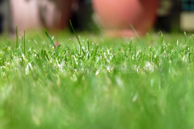 Stylish grass