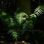 Creative lighting on Fern