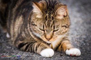 Pet Photographer - Bishop Auckland Photographer