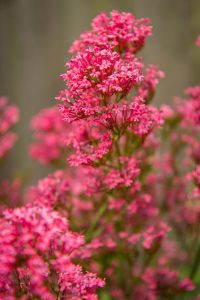 Delicate Pink Flowers - World Photo Day