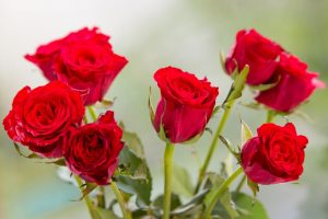 Red Roses - World Photo Day