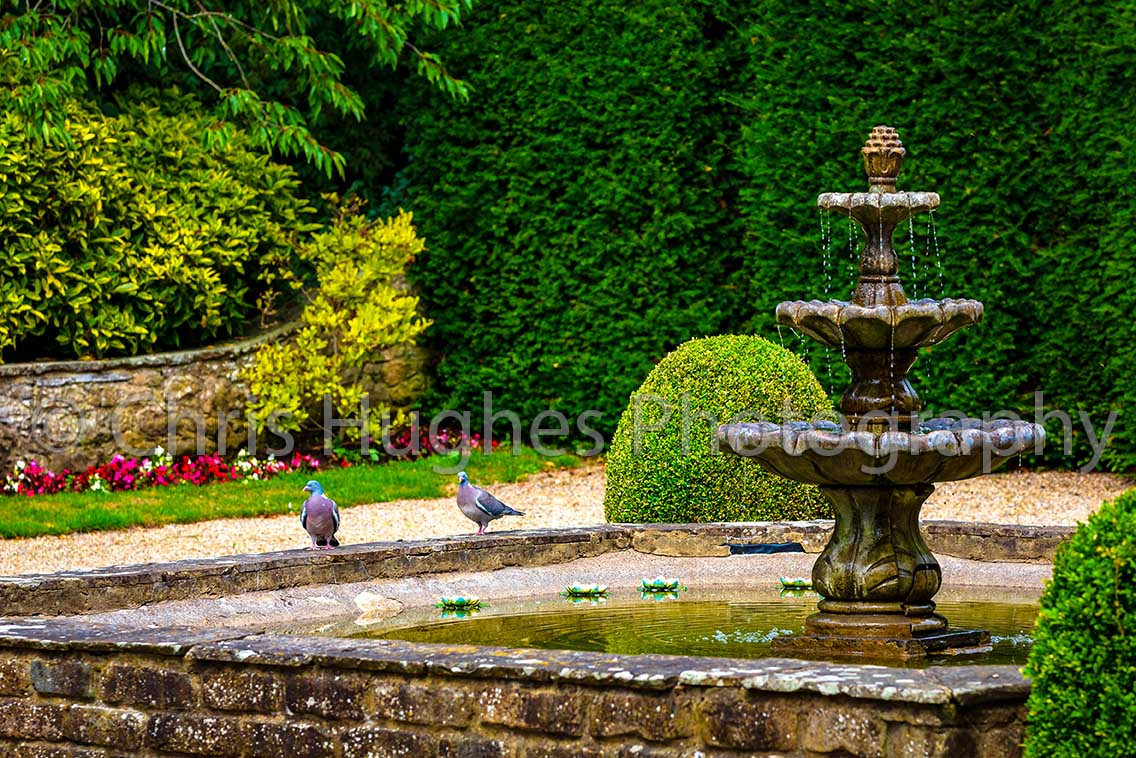 Two Pigeons Sit Aside a Fountain