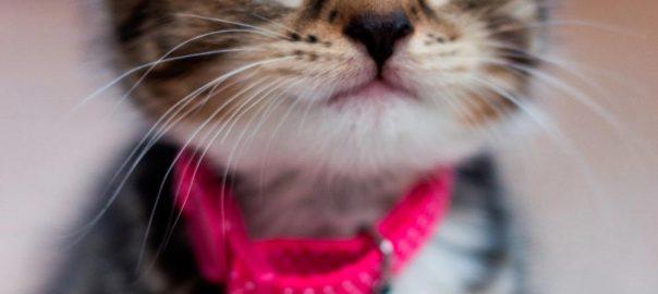 Pet Portraits / Pet Photography Bishop Auckland